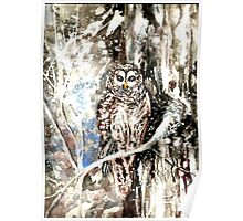 Barred Owl by Hannah Tiffin Poster
