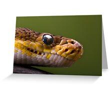 Timor Python Greeting Card