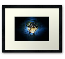 Midnight Dance Framed Print
