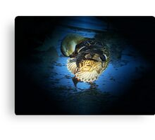 Midnight Dance Canvas Print