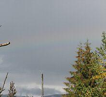 A hint of a rainbow by gypsykatz