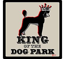 Standard Poodle King of the Dog Park Photographic Print