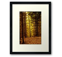 The golden forests,of the czech republic Framed Print