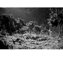 Jersey Hillside Photographic Print