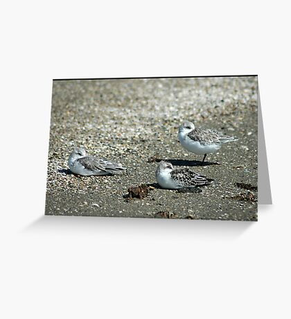 Relaxing on the beach Greeting Card