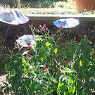Surprise in the garden by randi1972