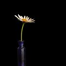 Still-life Photography by Martie Venter