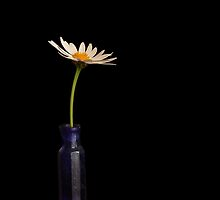 Still Life with White Daisy by Martie Venter