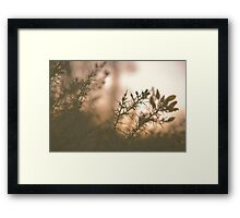 Hampstead Heath Sunset Flowers Framed Print