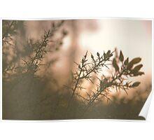 Hampstead Heath Sunset Flowers Poster