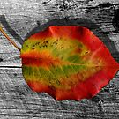 Leaf on Barnwood by © Joe  Beasley IPA