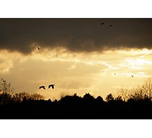 Off to Roost Photographic Print