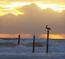 pelican pole by JLPhotos