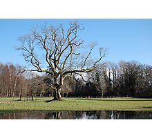 Tree in Winter Photographic Print