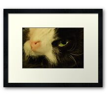 Hello Mummy Framed Print