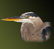 Great Blue Heron in Green by Delores Knowles
