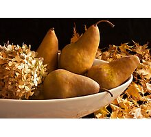 Pears And Hydrangea - Still Life  Photographic Print