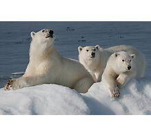 Bears On Ice Photographic Print
