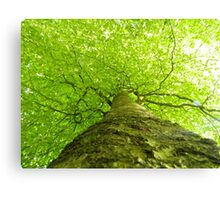 Looking Up Towards Nature Canvas Print