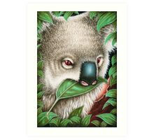 Cute Koala Munching a Leaf Art Print