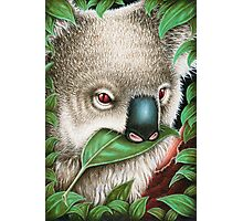 Cute Koala Munching a Leaf Photographic Print