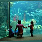 At the Aquarium by Ginny Schmidt
