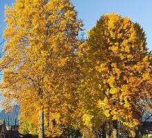 Golden Maple Corridor   by Rod Raglin