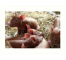 The Piglets - lovely print of some cute baby pigs Art Print