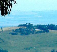 those rollin hills by brandon Tomlin