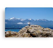 Seagull with mountains Canvas Print