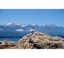 Seagull with mountains Photographic Print