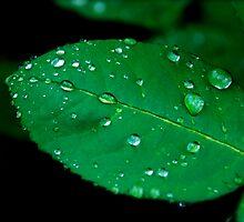 Rain by AnnabelHC