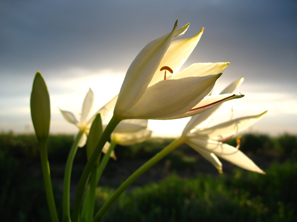 Unknown flower in the plains by Ross James