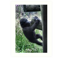Hanging On - Gorilla Infant at play photo / print / animal /wildlife Art Print