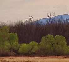 Mojave by Joe Bledsoe