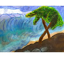Island Trees Photographic Print