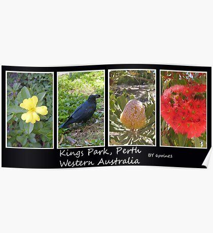 Kings Park Western Australia Poster