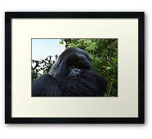 Silverback Gorilla, Hirwa Group, Rwanda, East Africa  Framed Print