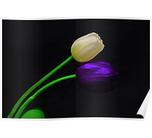 White and Violet Tulip Poster
