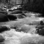 Brandy Creek Black and White by RipleyDigital