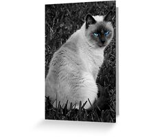Purr-ty  Greeting Card