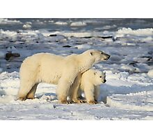 Standing Guard Over Her Cub, Churchill, Canada  Photographic Print