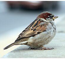 Capital Bird Photographic Print