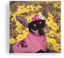 Little Doggie Canvas Print