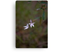 Oz Orchid Canvas Print