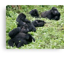 Mountain Gorillas Canvas Print