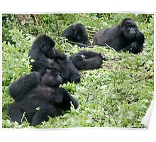 Mountain Gorillas Poster