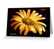 PAINTED DAISY Greeting Card