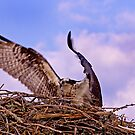 Landing at Home by BigRPhoto