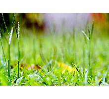 Grass Forest Photographic Print